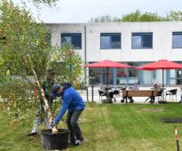 Aufstellen des Maibaumes (Foto: GRENZ-ECHO, Ralf Schaus)